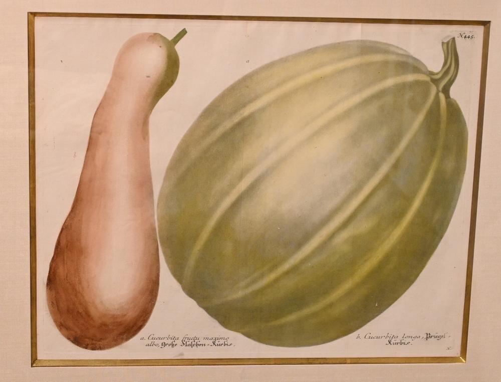 "Two after Johann Wilhelm WeinmannGerman, 1683 - 1741to include ""Cucurbita Fructii Marimo"" and ""Cucurbita Lagenaria Maxima"" engravi..."