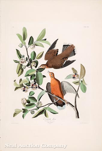 John James Audubon (American)