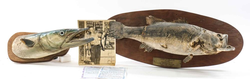 Two Taxidermy Fish