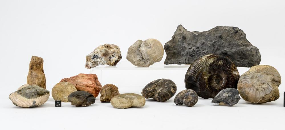 15 FOSSILS