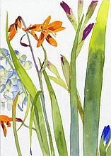 Pamela Sztybel, Orange Lily