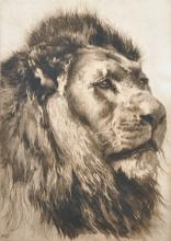 After Herbert Thomas Dicksee (1862-1942) British. Head of a Lion, Engraving, Unframed, 11