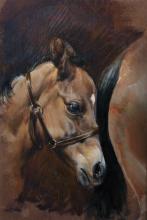 "Susan Crawford (1941- ) British. Sketch of a Foal's Head, Oil on Board, 11.75"" x 8""."
