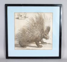A FRAMED ENGRAVING OF A PORCUPINE.
