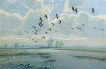 Peter Scott (1909-1989) British. Geese in Flight, Lithograph, Signed in Pencil, overall 15