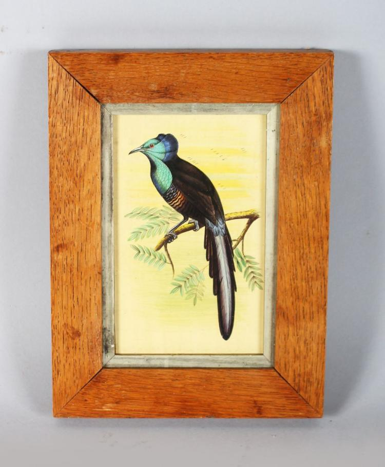 AN EARLY FRAMED WATERCOLOUR OF AN EXOTIC BIRD. 6ins x 4ins.