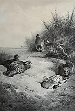 Archibald Thorburn (1860-1935) British. A Covey of Partridge, Lithograph, Signed in Pencil, 18.75
