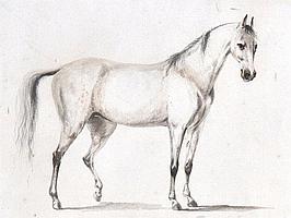 Peter Tillemans (1684-1734) Flemish. 'A Grey