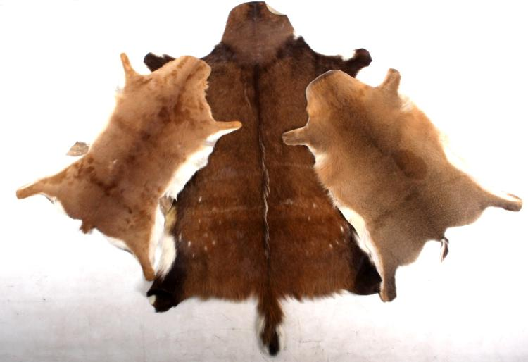Collection Of Montana Fawn Deer Hides