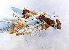Chickadees in the Snow by Jean Halverson Montana T