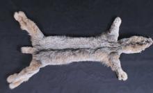 Alaskan Lynx Tanned Large Hide