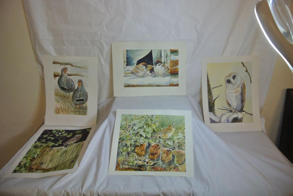 A collection of 5 original watercolour paintings of various birds.