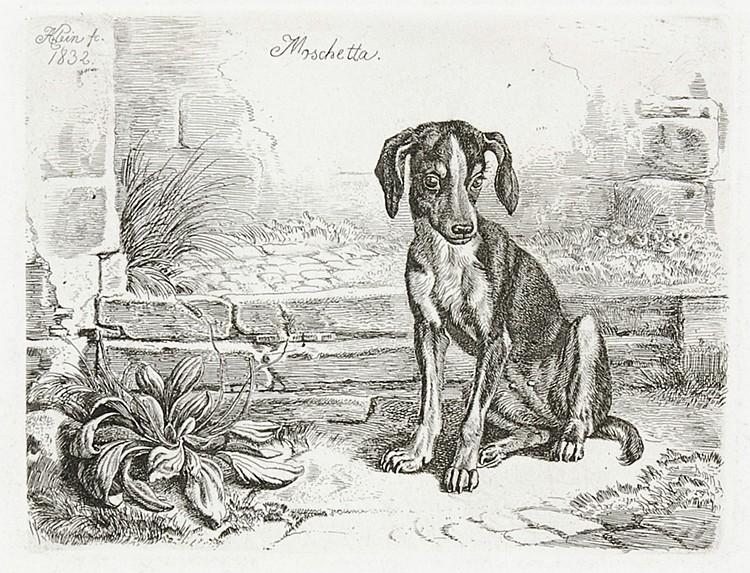 Klein, Johann Adam. Sammlung von 6 Original-Radierungen auf Velin. In der P