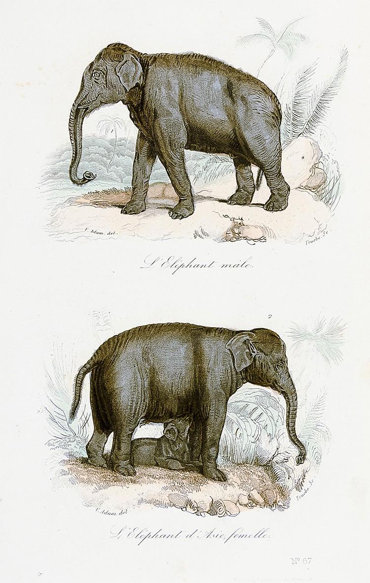 Biologie - Zoologie - - Buffon, George-Louis Leclerc de. Oeuvres complète d