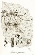 Biologie - Botanik - - Trattinnick, Leopold. Auswahl vorzüglich schöner, se