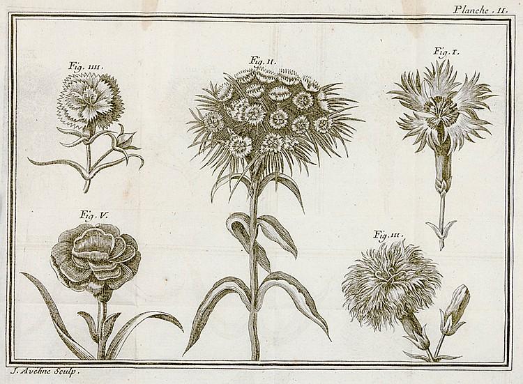 Biologie - Botanik - - Ardène, Jean Paul de Rome d'. Traité des oeillets, p