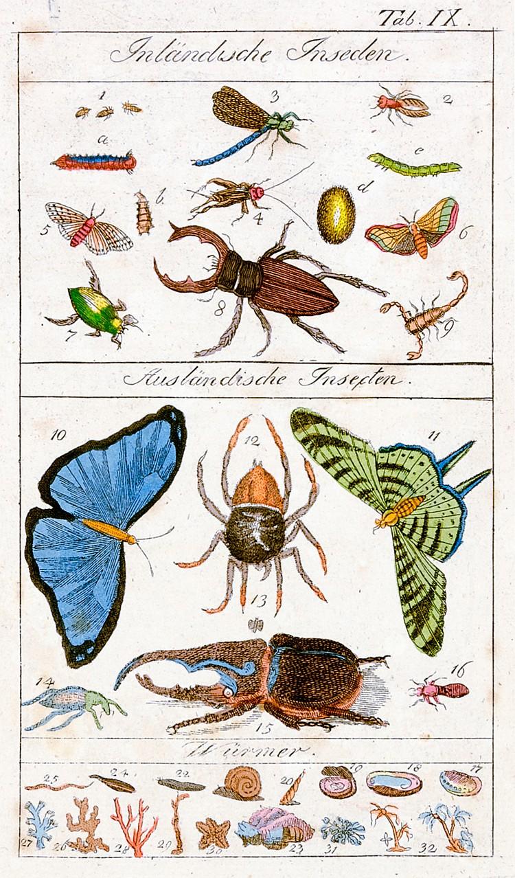 Biologie - - Vollständiges Handbuch der Naturgeschichte als Hausbedarf für