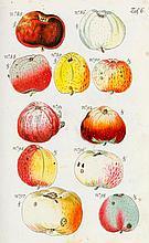 Biologie - Botanik - - Christ, Johann Ludwig. Vollständige Pomologie über d