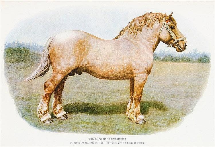 Pferde - - Afanasiev, S.V. und V. N. Liakohov. Albom Porod Loshadej SSSR (A