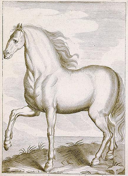 Pferde - - Garzoni, Marino. L'arte di ben conoscere, e distinguere le quali