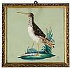 Vögel - - Sammlung von 12 aufwändigen, aquarellierten und mit Original-Fede