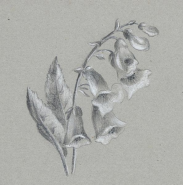 Liber amicorum - - Album mit 47 Original-Bleistiftzeichnungen und handschri