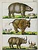 Biologie - Zoologie - - Reichenbach, A.B. Bildergallerie der Thierwelt oder
