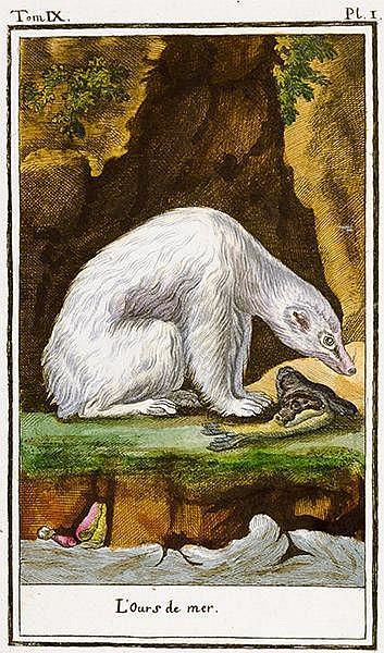 Biologie - Zoologie - - Holandre, F. Planches pour l'abrégé d'histoire natu