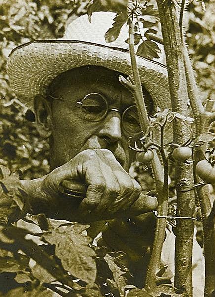 Hesse, Hermann. Stunden im Garten. Eine Idylle. Wien, Bermann-Fischer, 1936