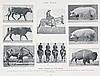 Photobücher - - Muybridge, Eadweard. Animals in Motion. An electro-photogra