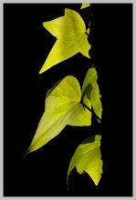 Photograph -Green Leaves-Hand Signed