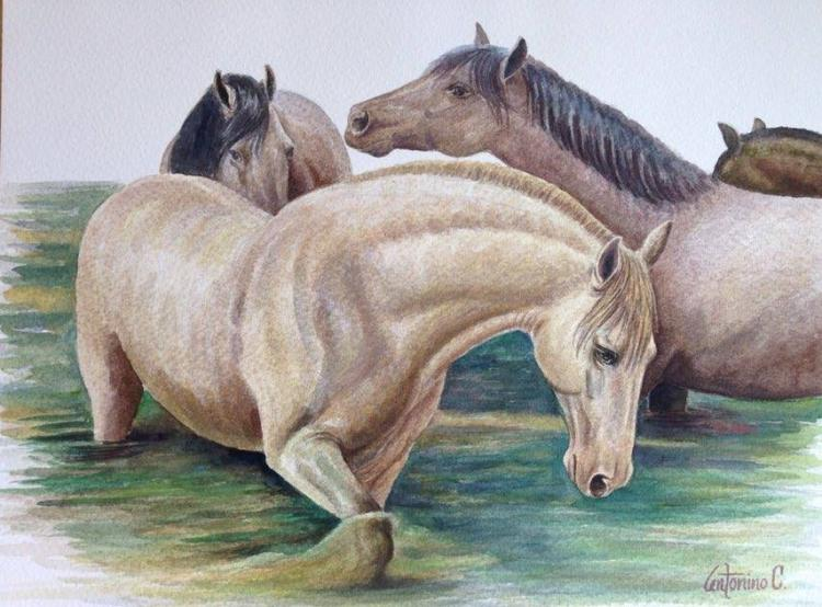 Original Watercolor by Antonino