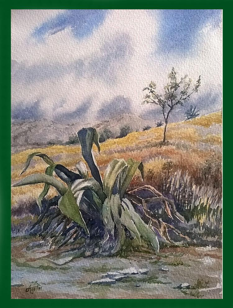Agave-Watercolor on Archival Paper Original by Santiago Aguilar