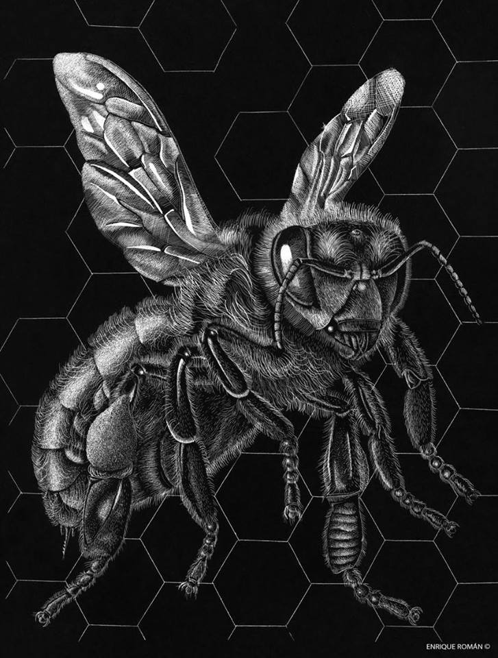 Honey Maker-Contact-Original Etching by Roman