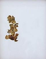 Maria Fernanda Cardoso Sin título II Alas de mariposa s/papel 1995 43 x 45 cm. Madrid, Colombia Visible/Invisible. Galería Fernando Pradilla. Noviembre 2001.