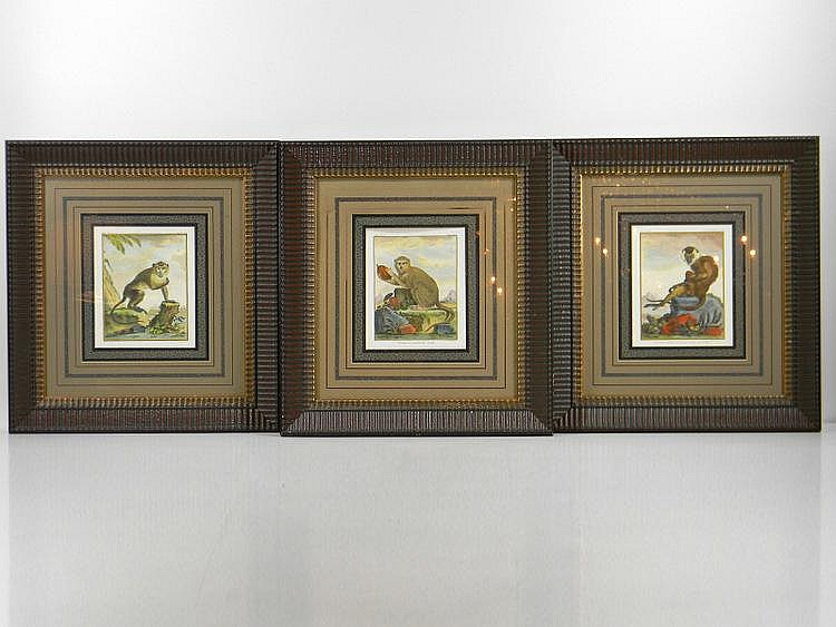 SET OF THREE FRAMED ENGRAVINGS OF MONKEYS