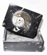 Rectangular Fossil Orthoceras Ammonite Trinket Box