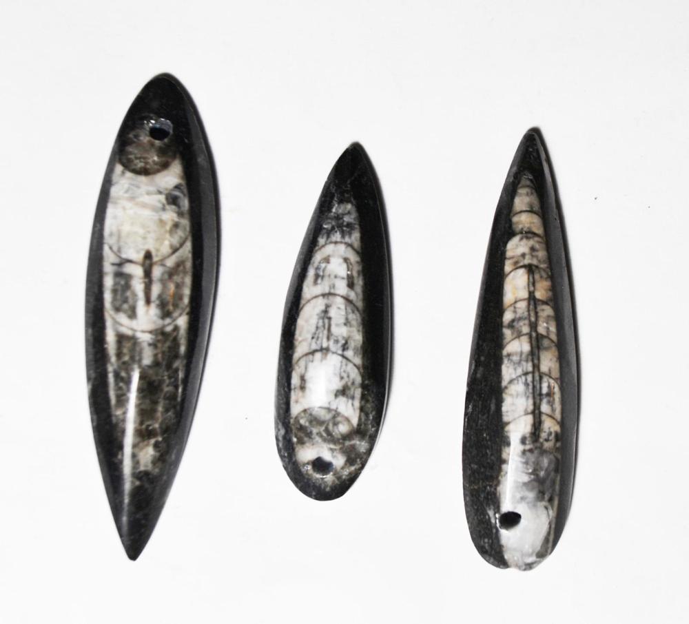 Drilled Otheroceras Fossils For Pendants