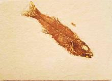 CHRISTMAS MEGA SALE #3- CITRINE & AMETHYST GEODES, FOSSILS,14K,.999 SILVER, HOME DECORATIONS, COLLECTIBLES,ANTIQUES