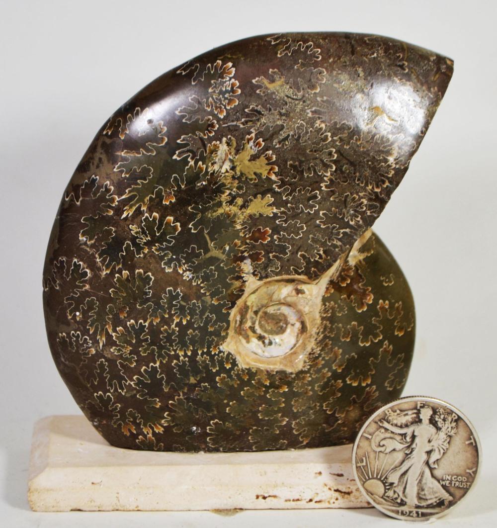 Polished Agatized Ammonite (Cleoniceras) -Mounted