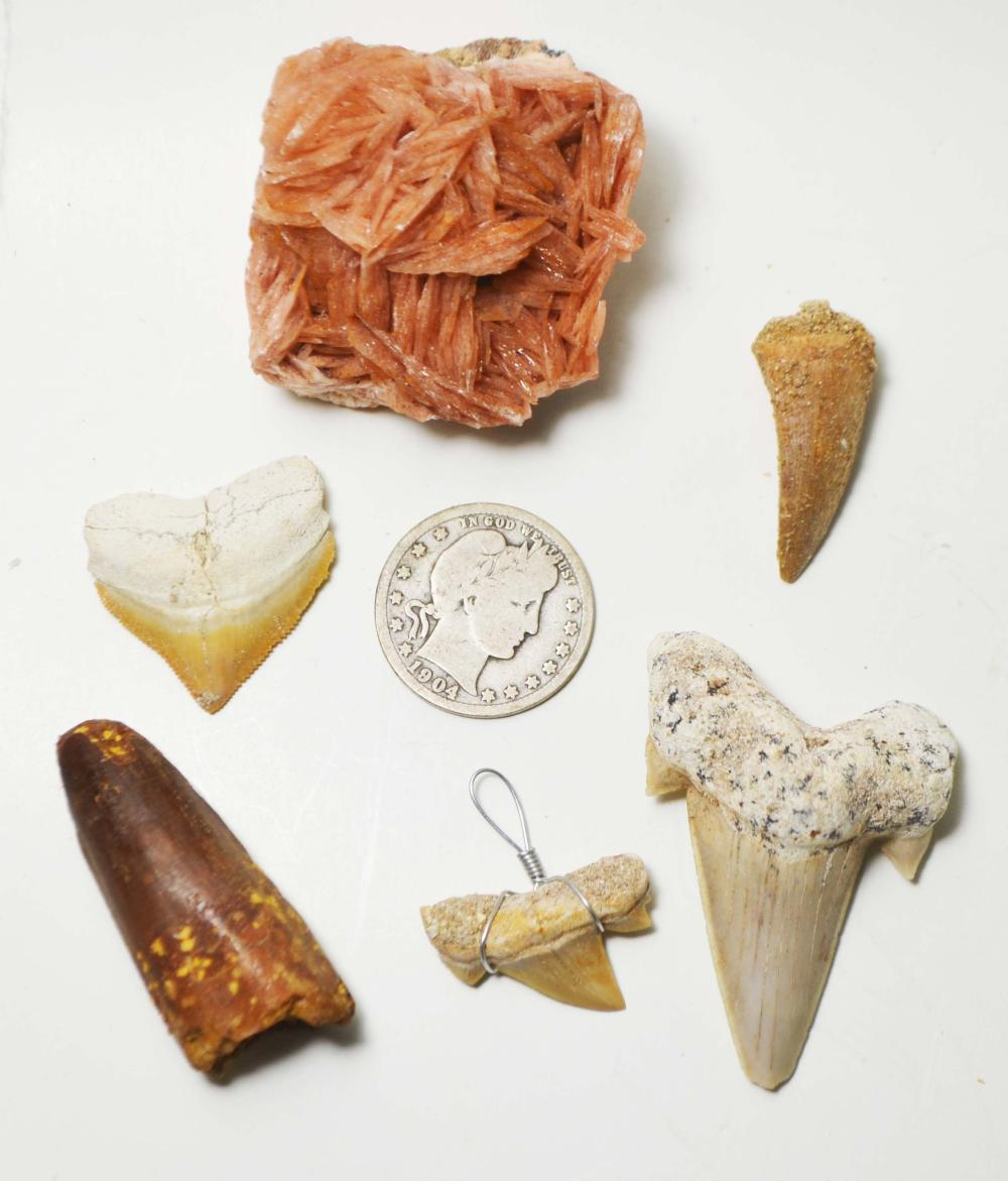 """6-Piece Fossil Tooth Collection Including. """"Spinosaurus"""""""