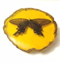 Amber Cased Fossilized Amazon BUTTERLY