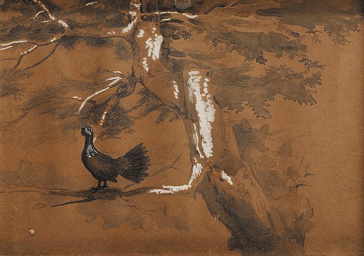 Jules Bertrand GÉLIBERT (1834-1916) Coq de bruyère en forêt Crayon, aquarelle et gouache Signé en bas à gauche 20,5 x 29 cm Provenance : Descendance directe de l'artiste