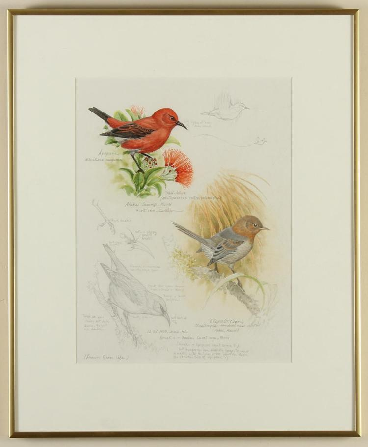JOHN PITCHER (1949-, VT) - PRELIMINARY STUDIES OF NATIVE HAWAIIAN BIRDS - Pencil and Watercolor studies of small birds with detailed...