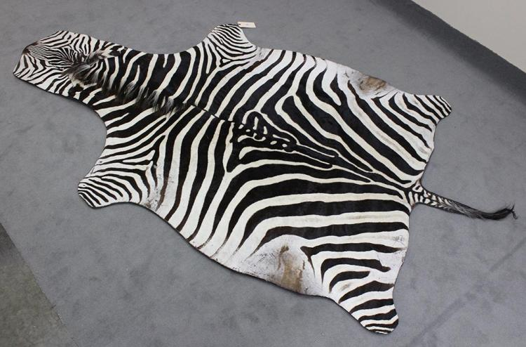 TAXIDERMY: ZEBRA SKIN RUG - Vintage full hide with tail mounted to felt backing, Condition good. 20th century.