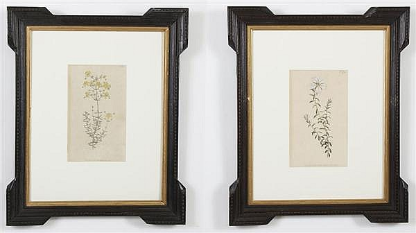 WILLIAM CURTIS (1746-1799, UK) HANDCOLORED PRINT ON PAPER - Two botanical prints, (1) depicts a yellow St. Johns Wort (plate #178).....
