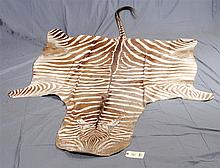 TAXIDERMY: ZEBRA SKIN - Full hide with tail, unmounted. Condition good to fair with some wear around muzzle, belly and extremities;...