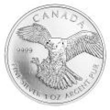 Canadian Silver 1 oz Peregrine Falcon 2014 (Birds of Prey Series) #PAPPS96512