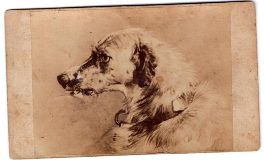 Victorian CDV of a dog