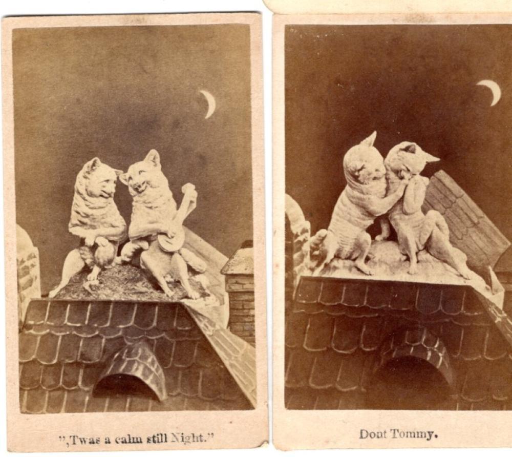Amusing Tom Cat CDVs